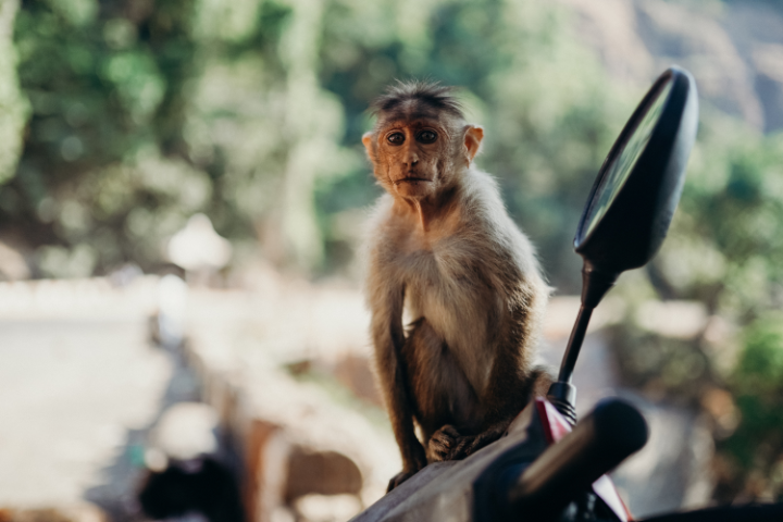 Monkey on motorbike tries to steal toddler